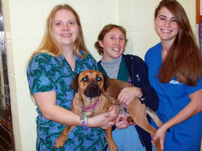VCA Brown Animal Hospital image 1