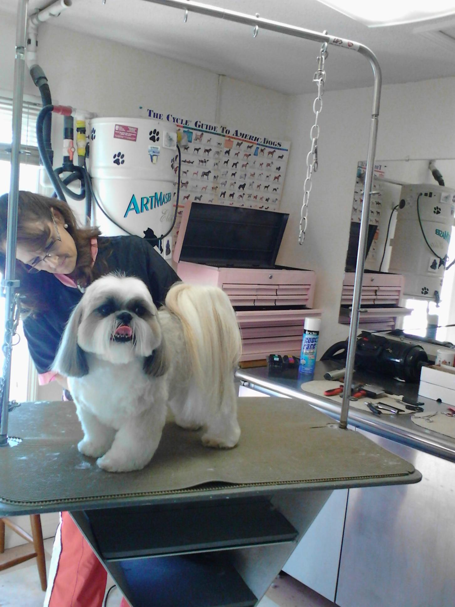 Personal Touch Dog Grooming image 6