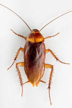 Rogue Pest Solutions image 5
