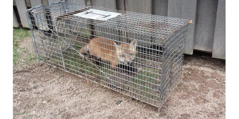 TAAP Pest Elimination image 8