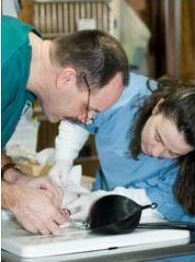 Great Falls Veterinary Hospital image 4