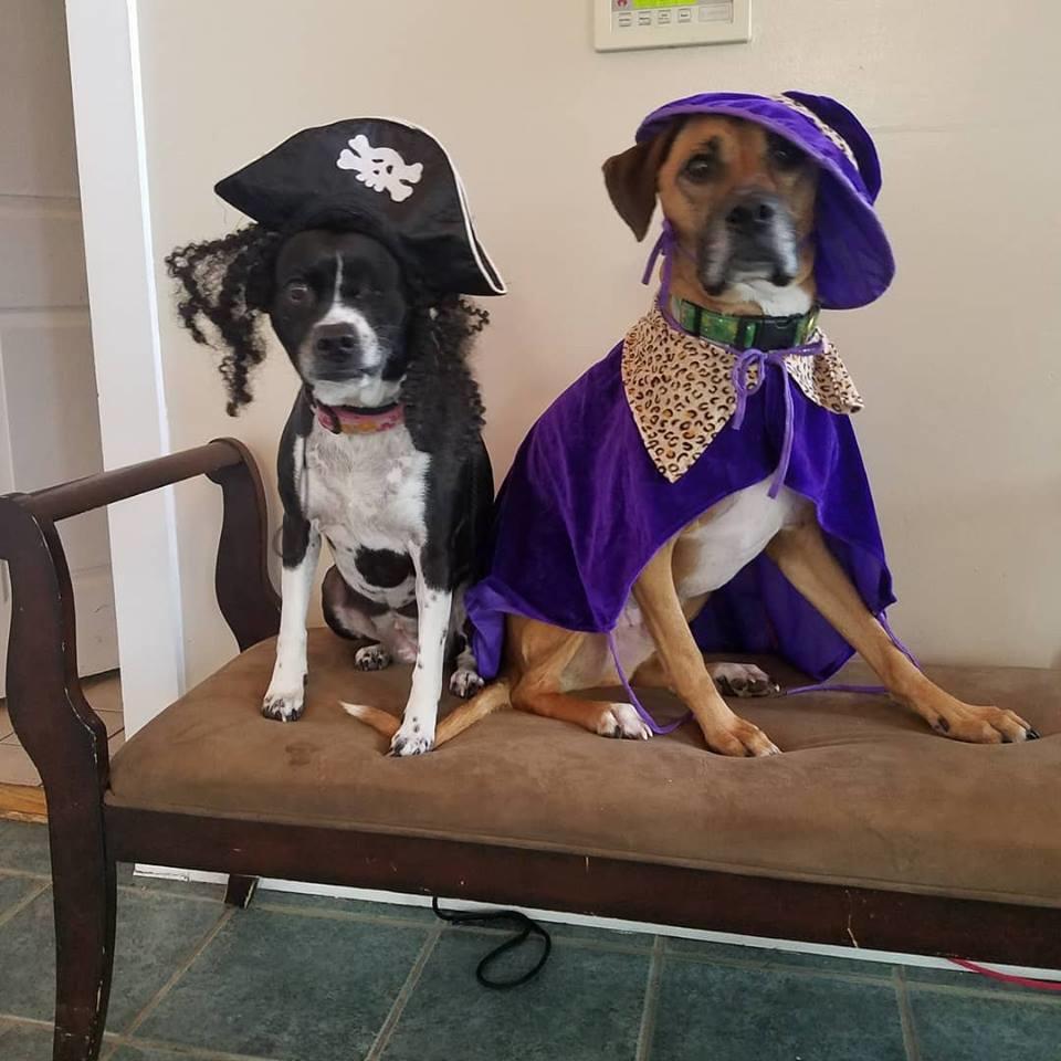 New England Canine image 9