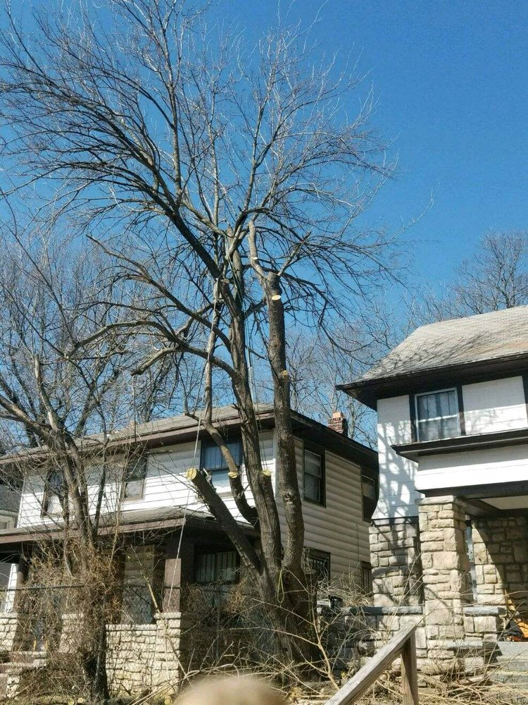 Richter's Tree Service LLC image 1