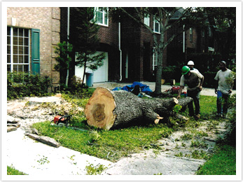 Houston Tree Team image 3