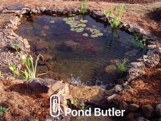 Pond Butler image 4