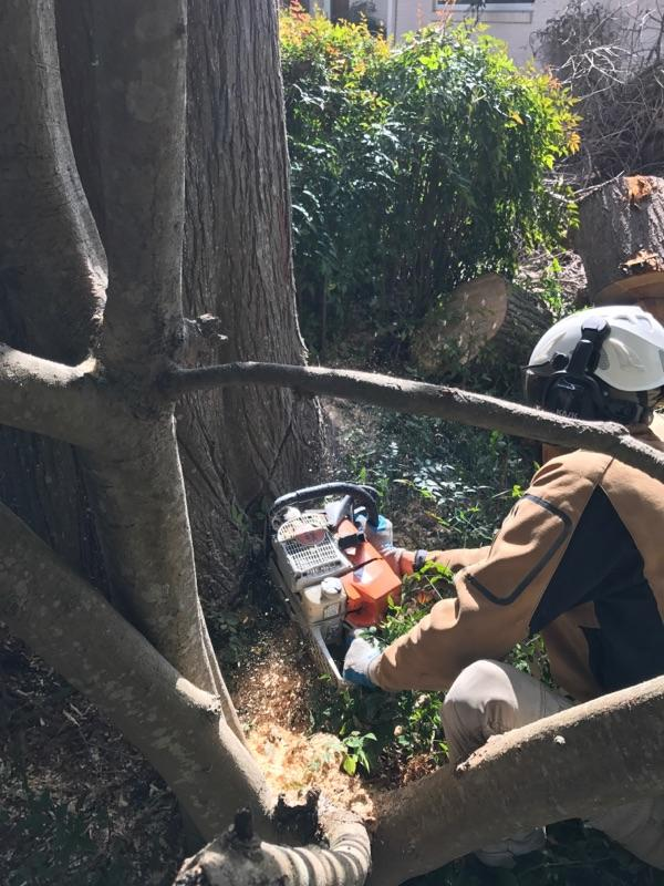 S & L Tree Service & Stump Grinding image 16