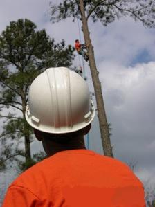 Houston Tree Service image 11