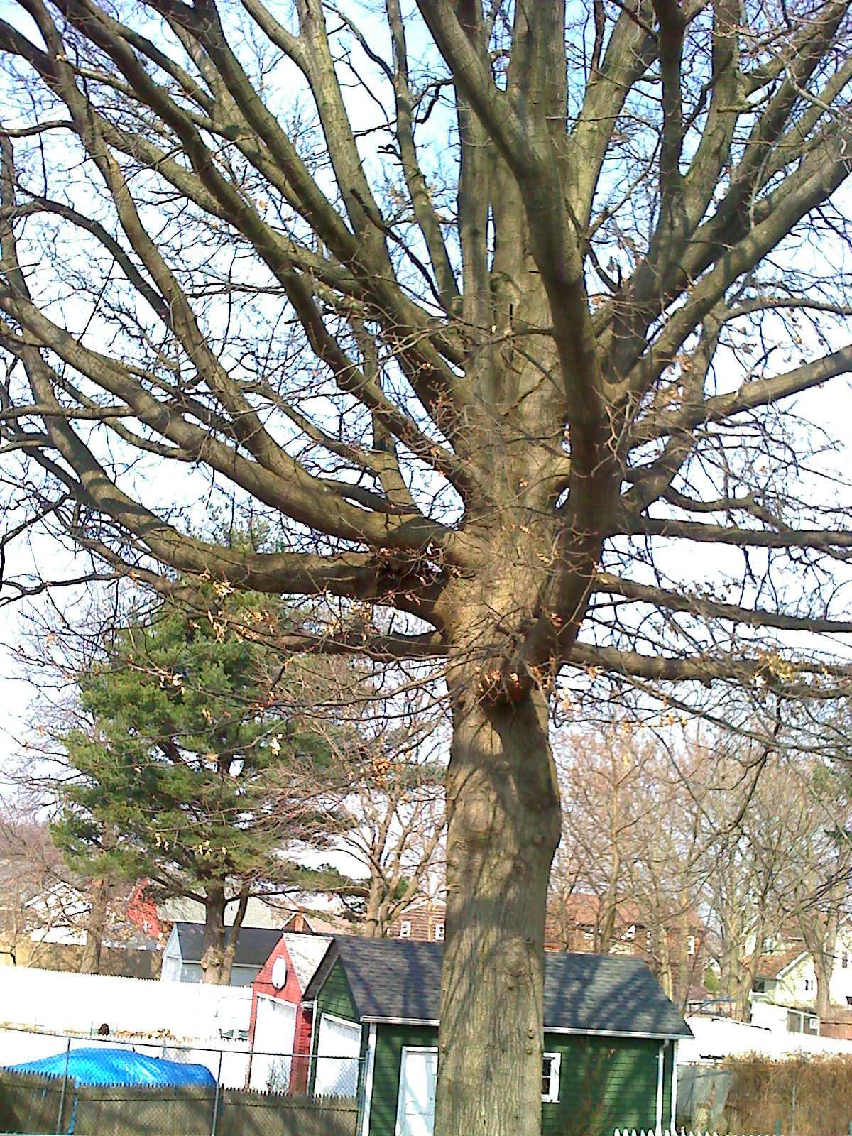 Miklos Tree Service - ad image