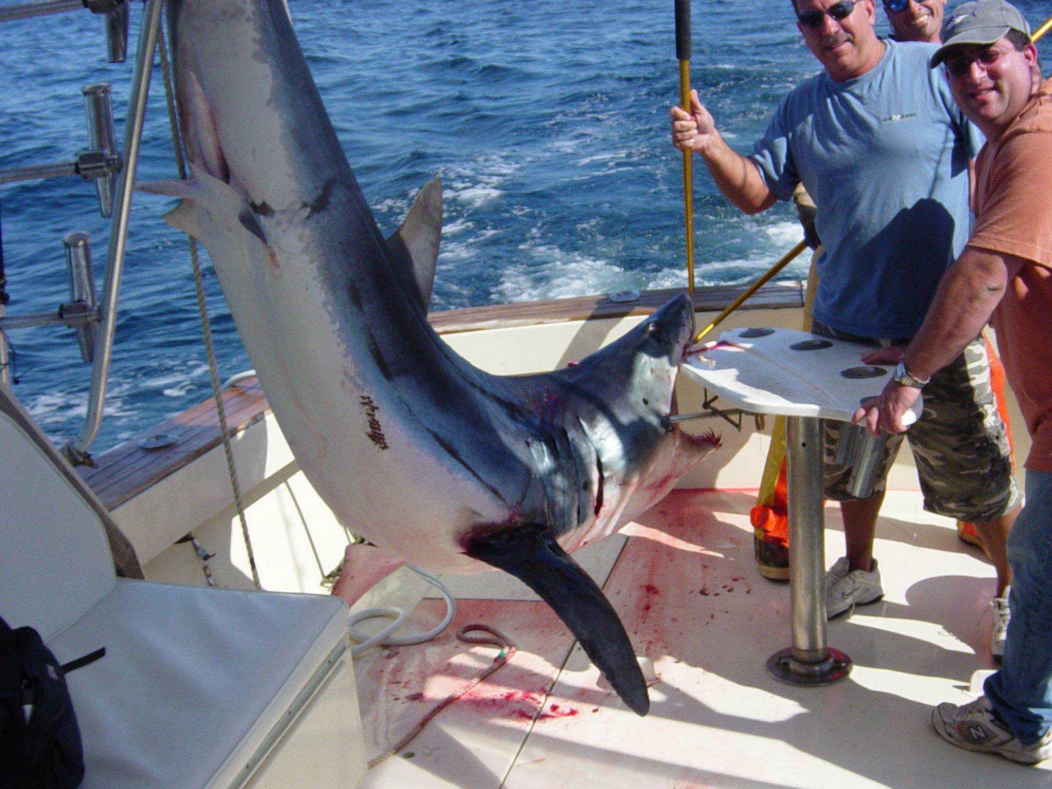 Captain Art's Fishing Charters image 11