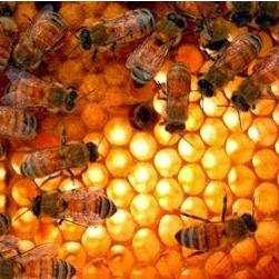 The Bee Man image 5