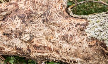 Precise Tree Care Inc image 1