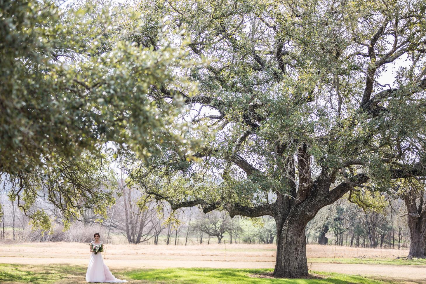 Taylor Bible Weddings image 8