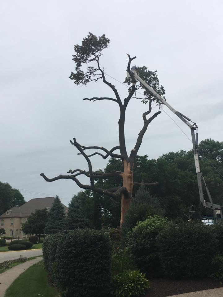 Freers & Sons Tree Service image 1