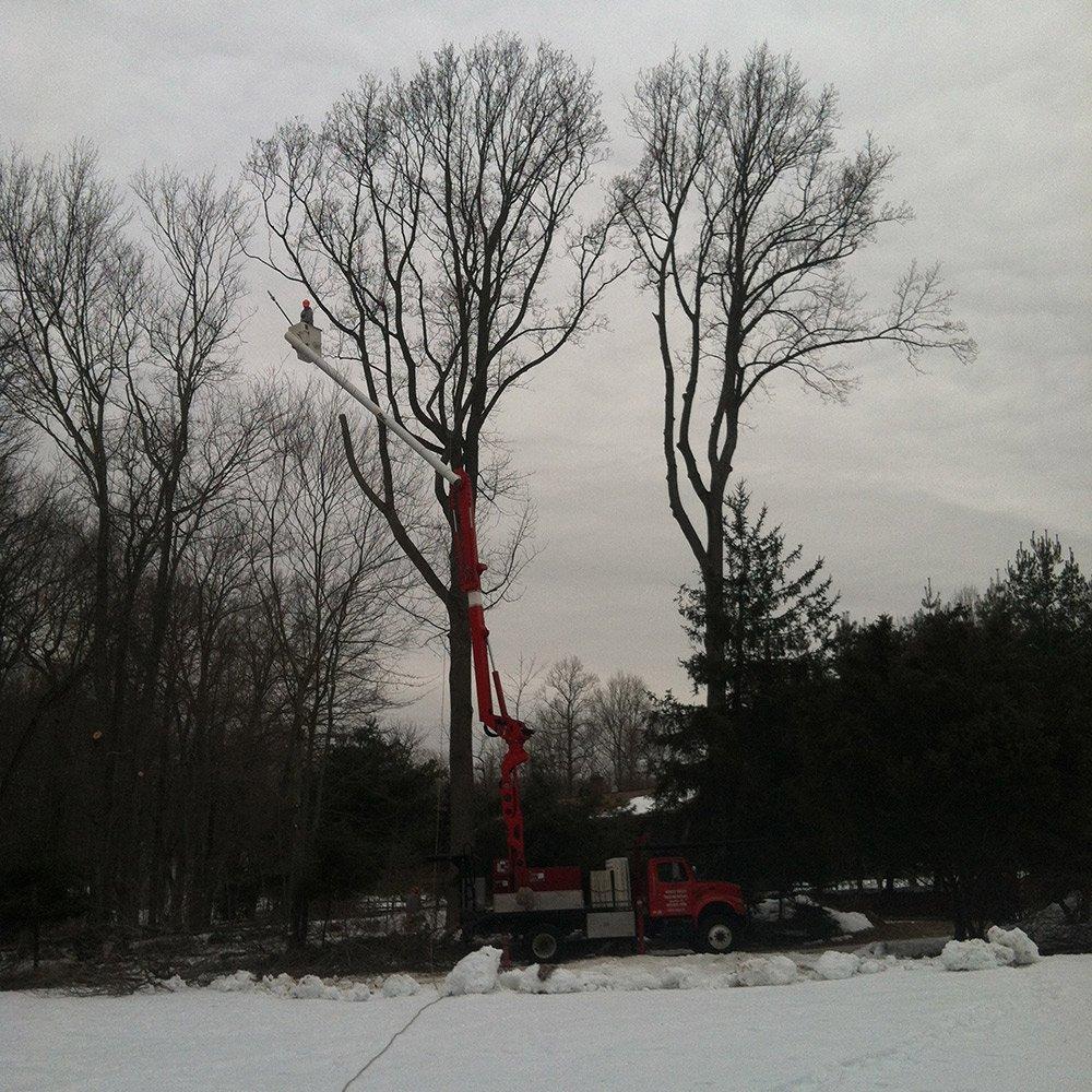 White Hills Tree Removal LLC image 2