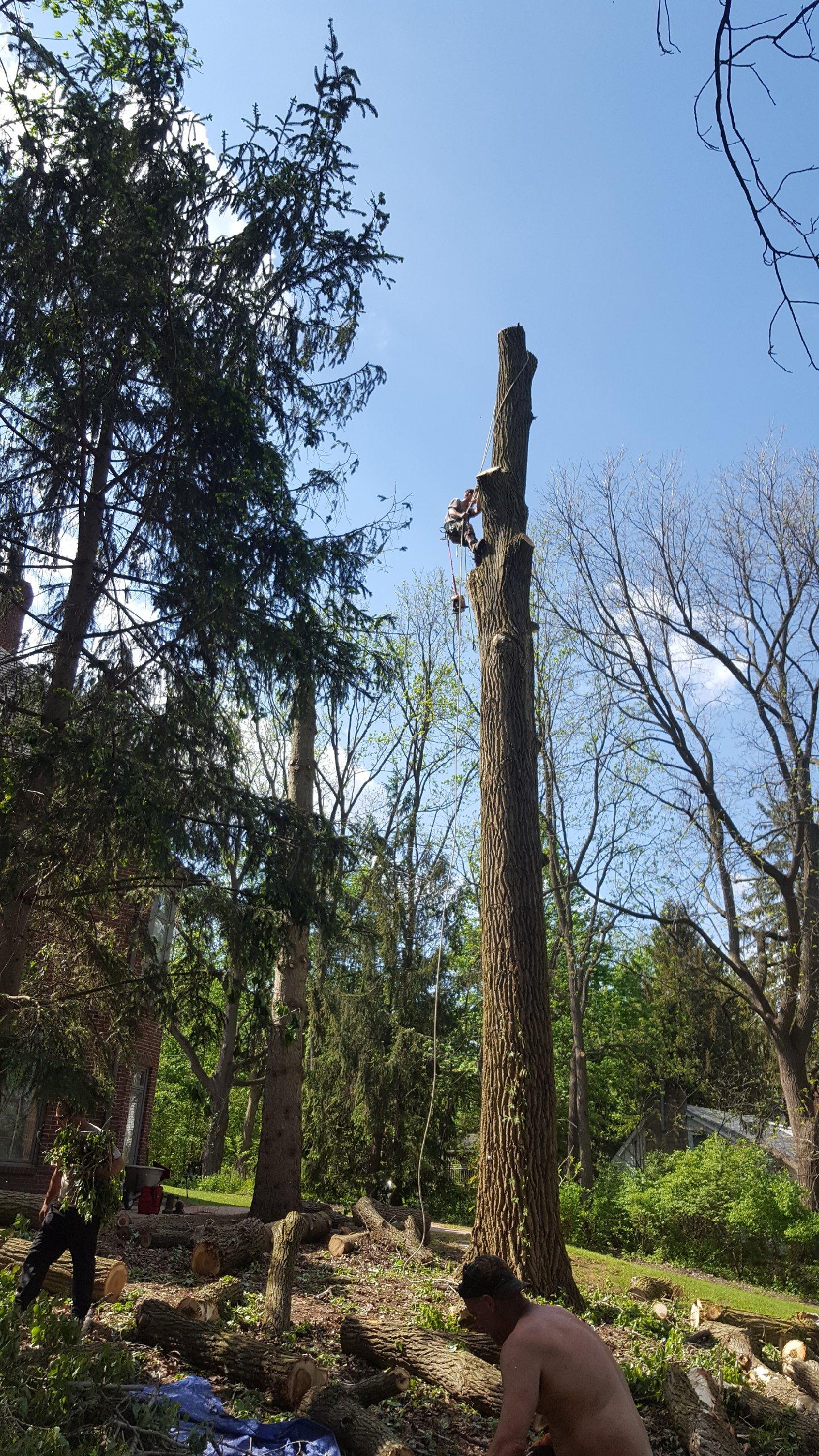 Coffman's Tree Service image 18