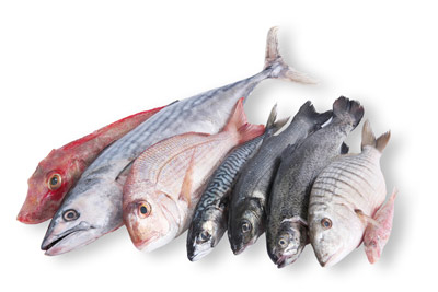 Pescheria Bottega del Pesce