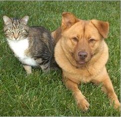 Pet Clinic at Woods Corner - Bruce Radomski DVM image 4