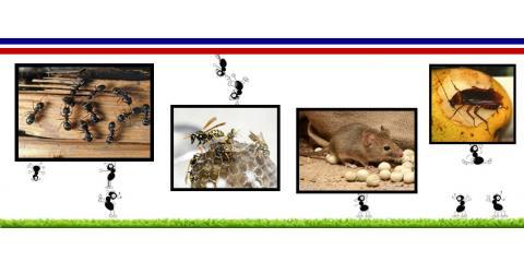 Surety Pest Control image 1