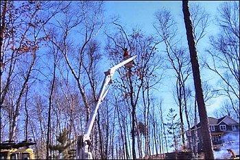 Jn Tree Service image 1