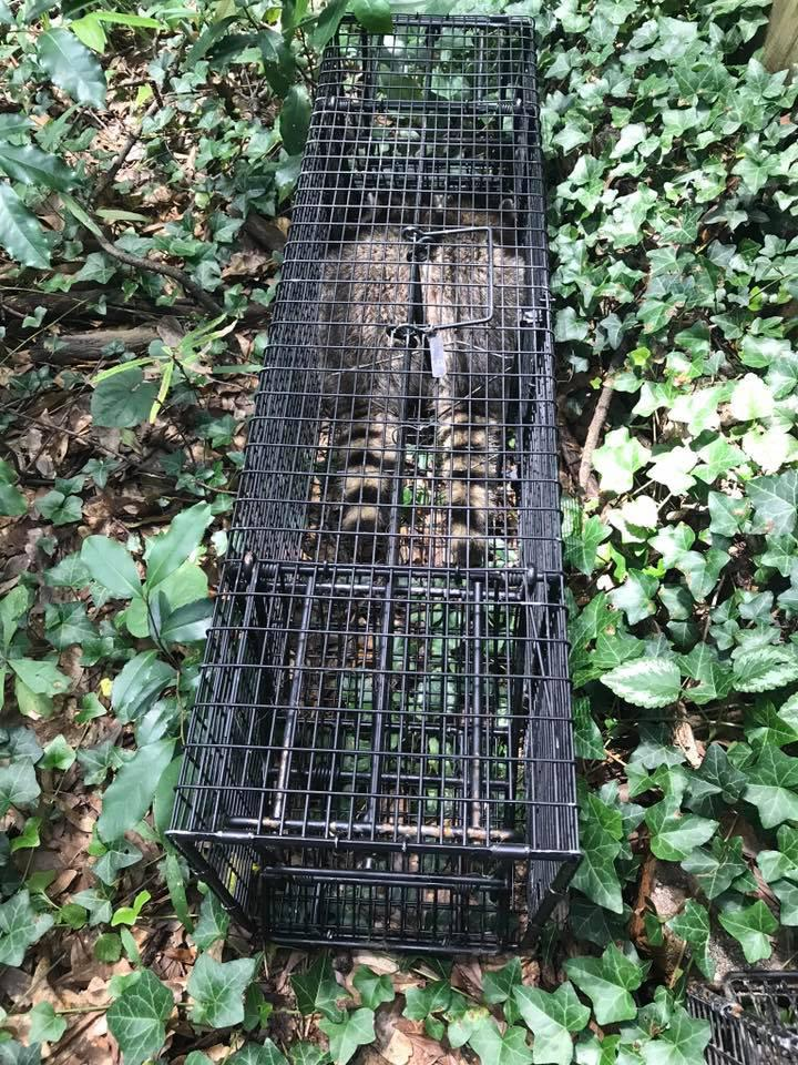 Smart Solutions Wildlife Removal image 4