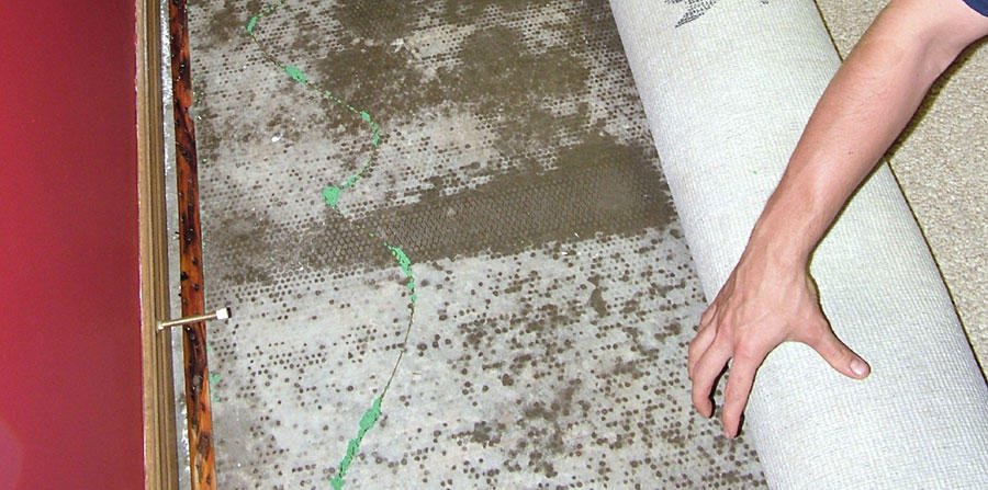 Absolute Carpet Care Inc image 6