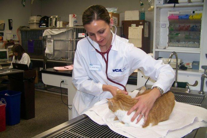 VCA Chicago North Animal Hospital image 2