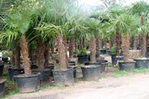 Alfaro Tree Sales Inc image 0