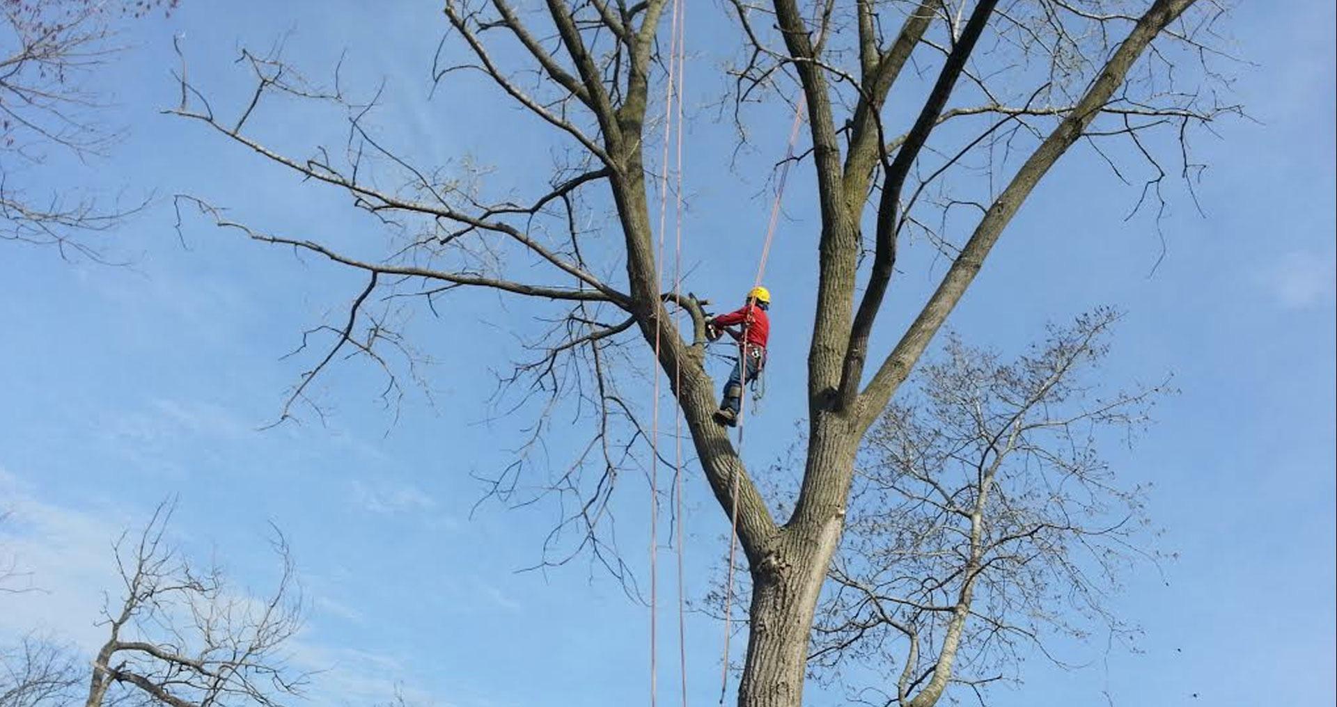 Rivas Tree Service image 5