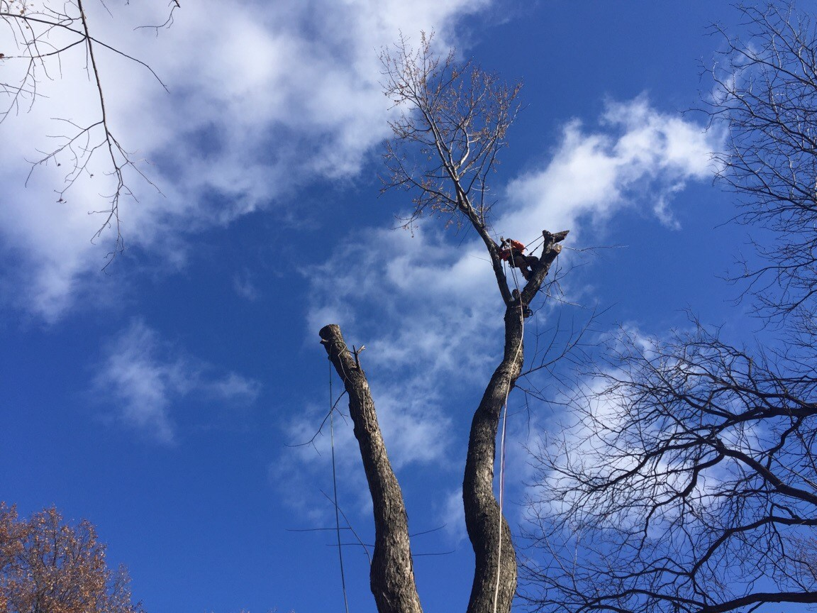 Richter's Tree Service LLC image 0