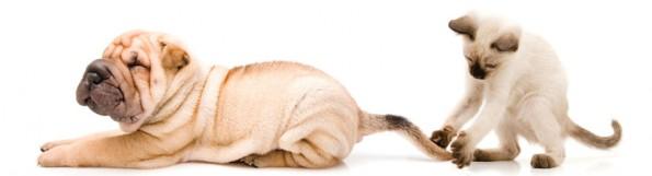 Parker Way Veterinary Clinic image 1