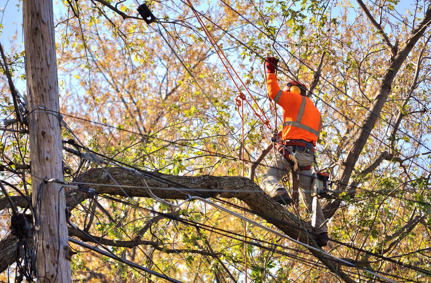ROSS TREE SERVICE LLC image 3