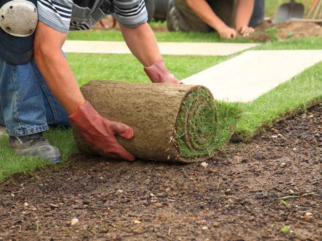 DM's Landscape and Lawn Care Maintenance image 2