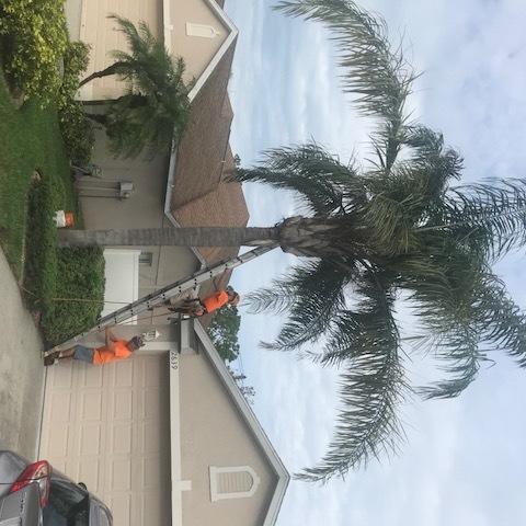 Burysek Tree Service