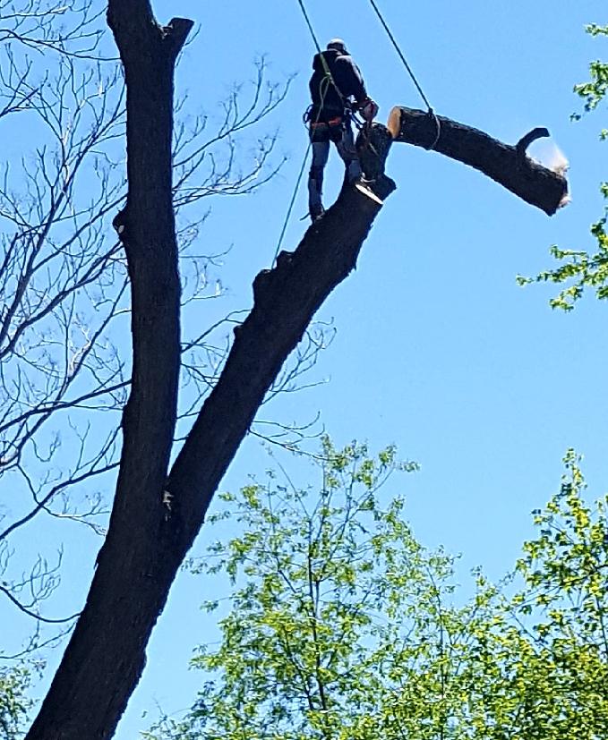 Coffman's Tree Service image 32