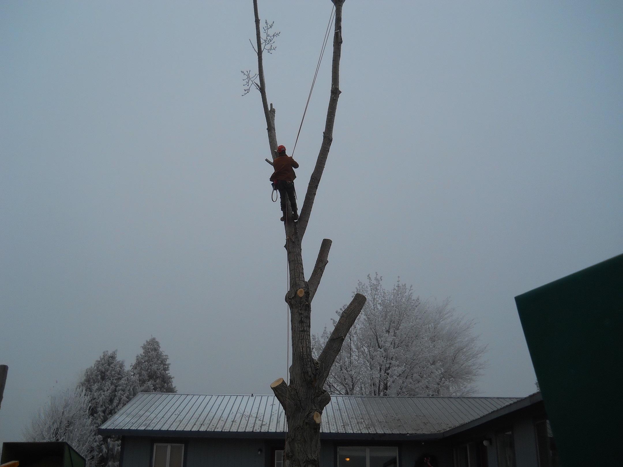 Southern Idaho Tree Specialists image 0
