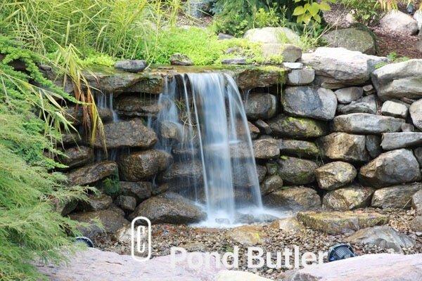 Pond Butler image 8