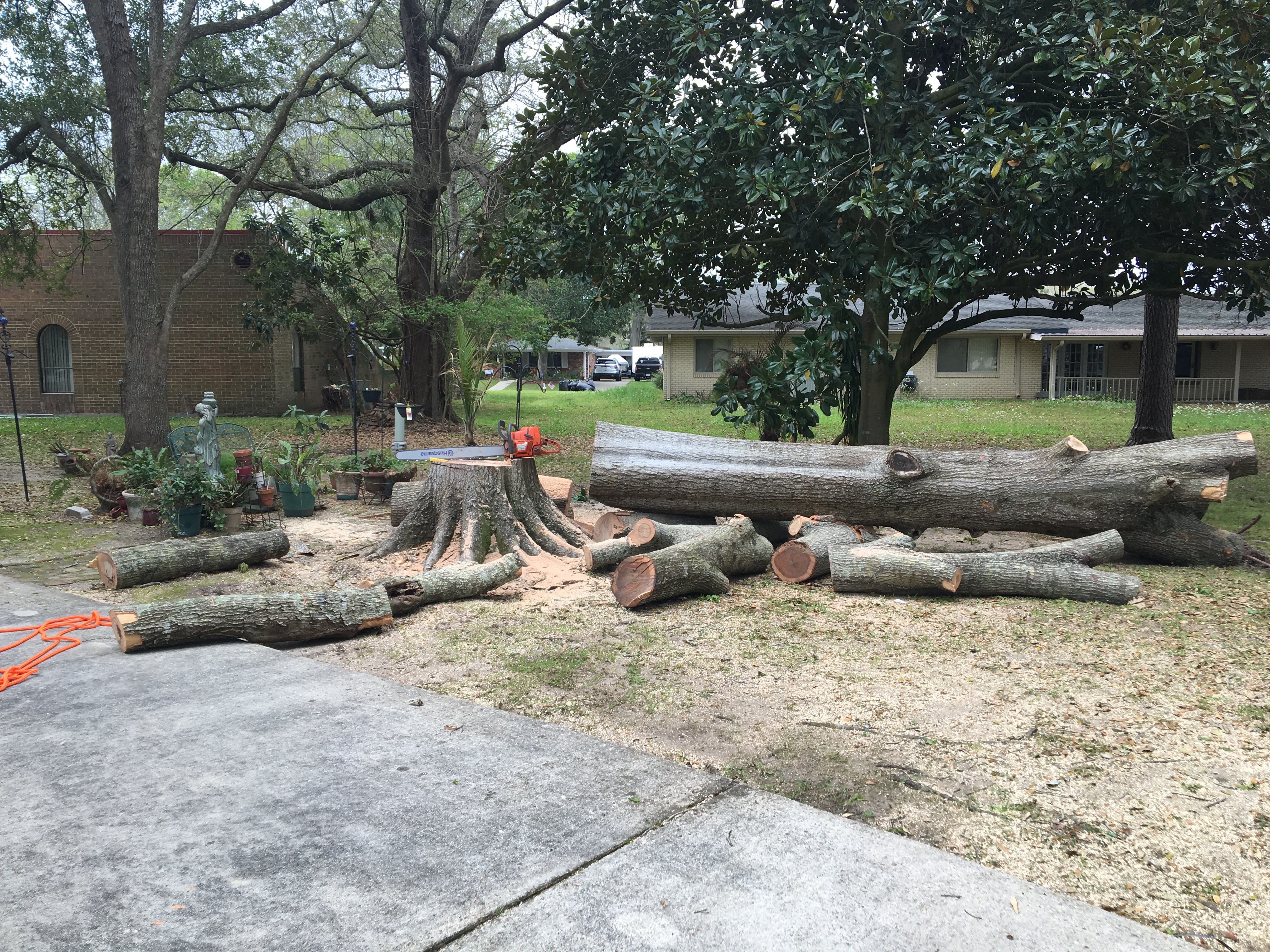 Mudge Tree Service image 3