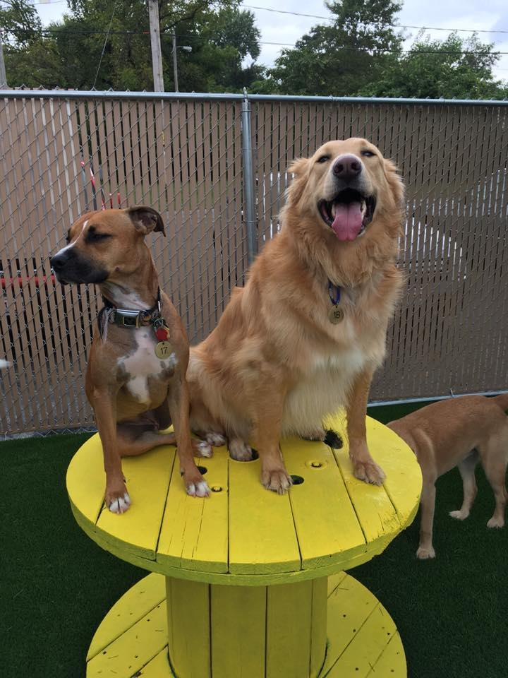 Jagger's Doggie Daycare, Dog Grooming, Training & Boarding image 7
