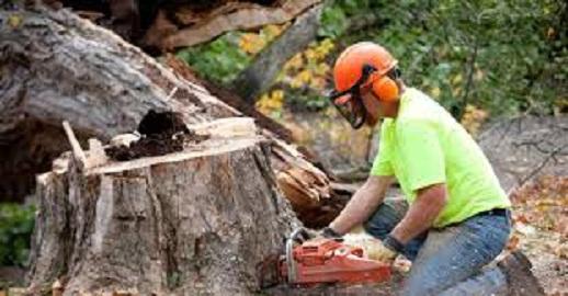 Stump Grinding Iowa LLC image 2