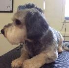 Clip N' Dip Pet Grooming image 3