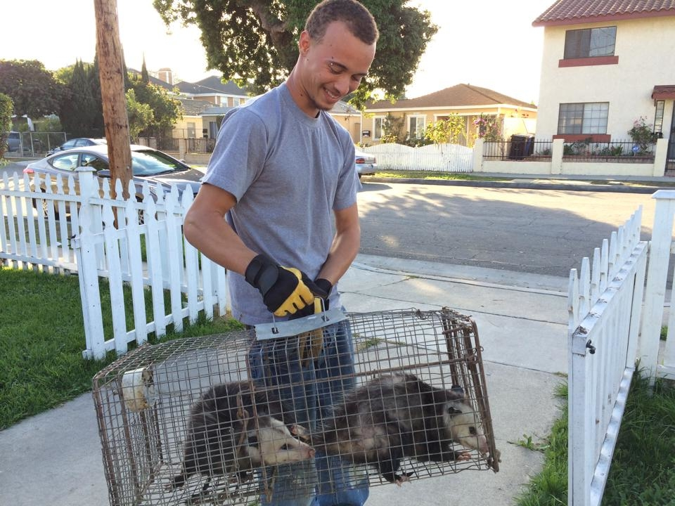 Urban Wildlife Trapping Experts image 8