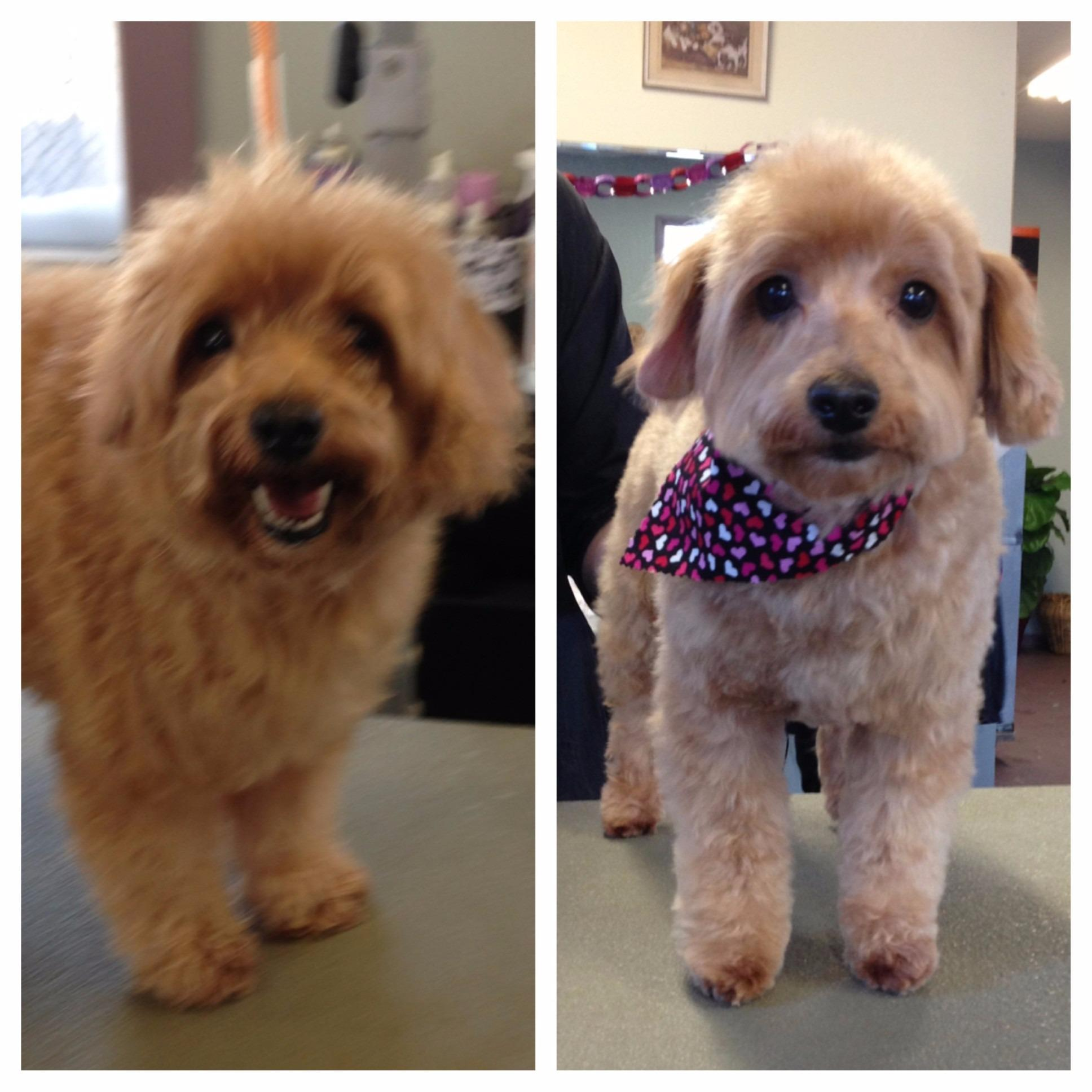 ALL Groomed UP image 9