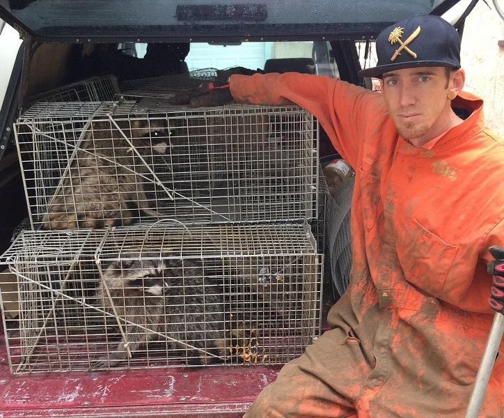 Urban Wildlife Trapping Experts image 0