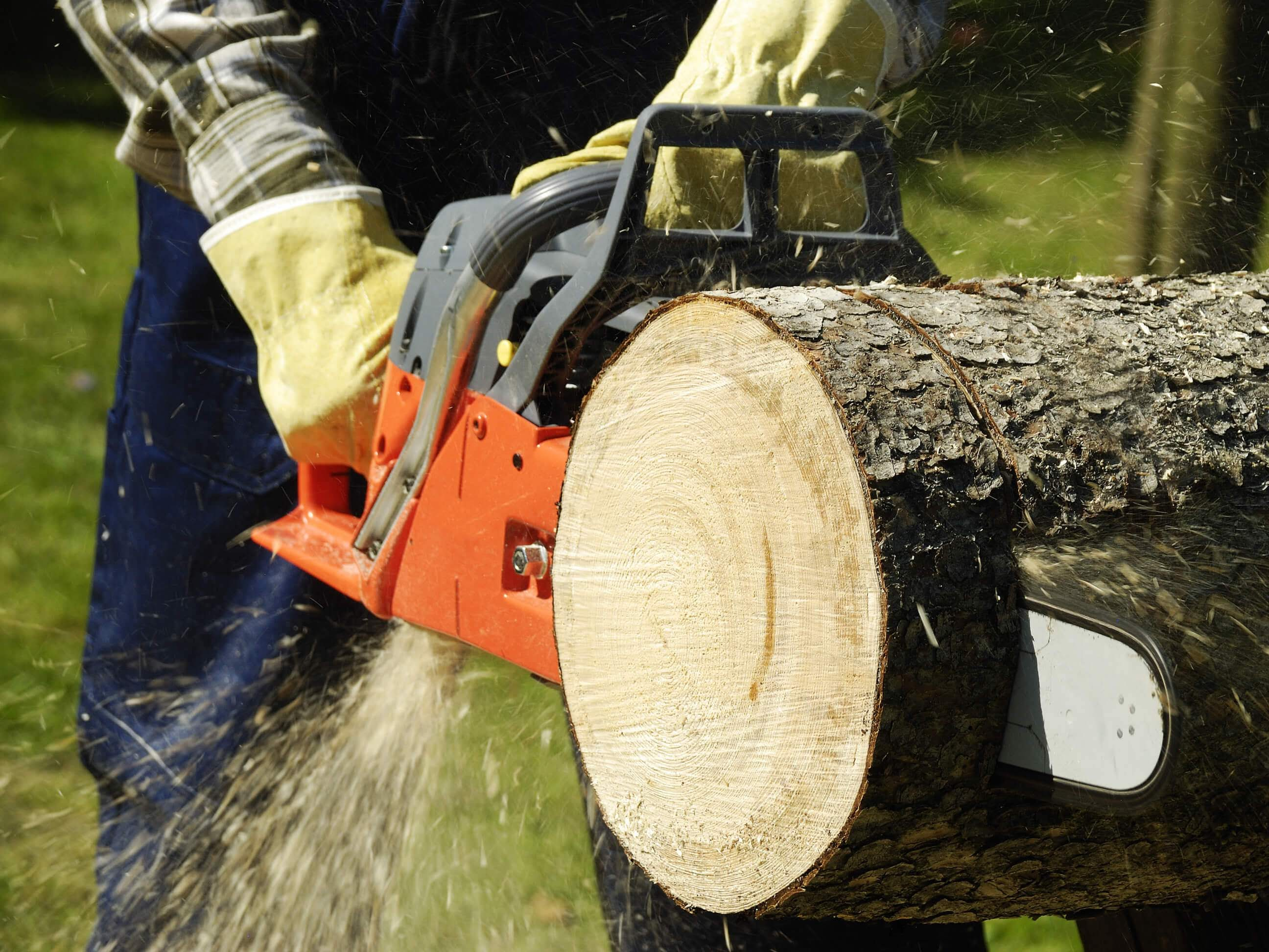 Father And Sons Tree Service image 0