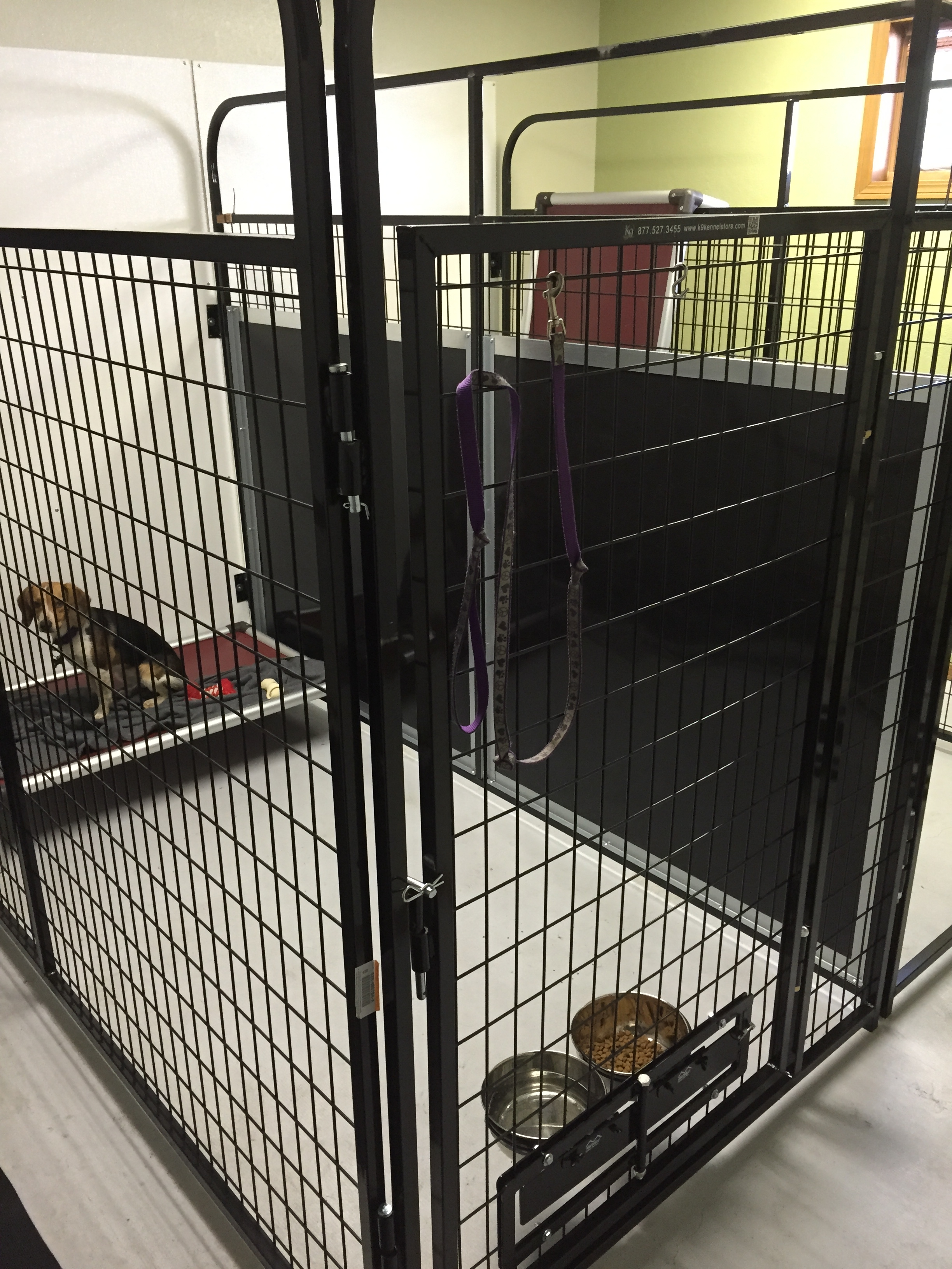 Jagger's Doggie Daycare, Dog Grooming, Training & Boarding image 20
