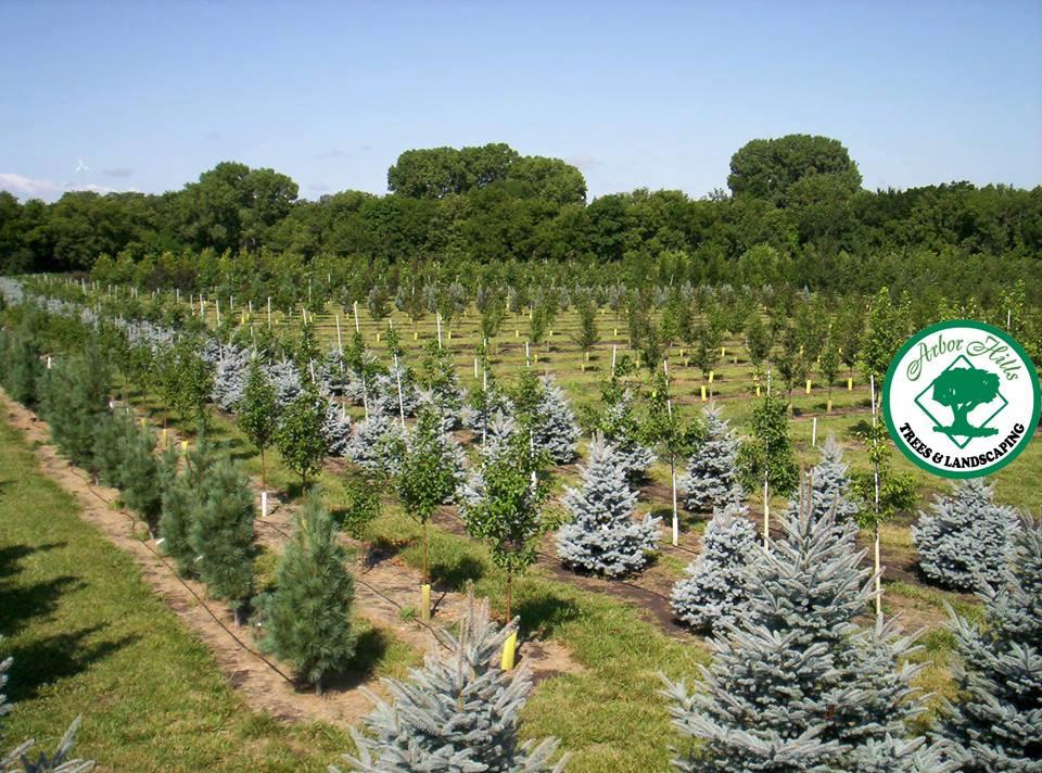 Arbor Hills Tree Farm image 0