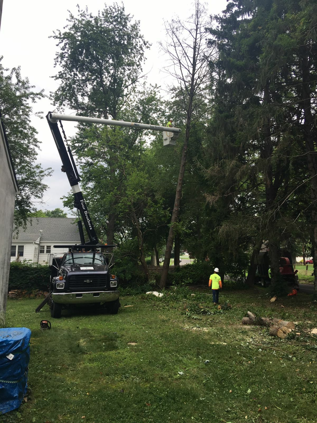Four Brothers Tree Service Inc. image 37