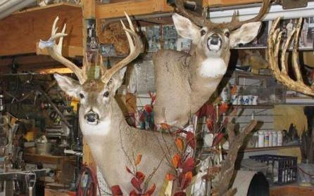 Dave's School Of Taxidermy image 1
