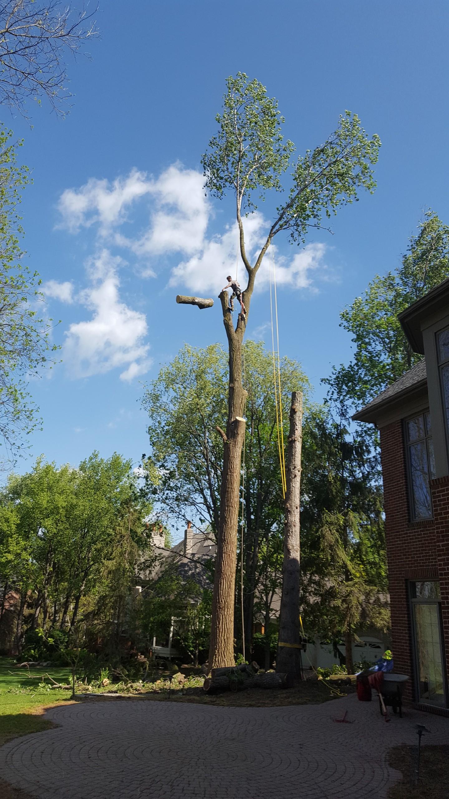 Coffman's Tree Service image 27