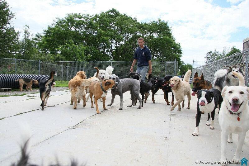 Auberge La Niche - Pension Canine de l'Estrie à Sherbrooke